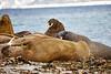 Walrus_Svalbard_2018_Norway_0128