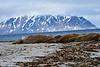 Walrus_Svalbard_2018_Norway_0244
