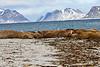 Walrus_Svalbard_2018_Norway_0038