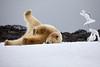 Yoga_Polar_Bear_On_Snow_Svalbard_2018_Norway_0005