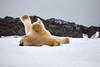 Yoga_Polar_Bear_On_Snow_Svalbard_2018_Norway_0015