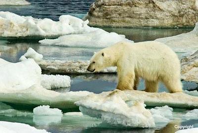 PolarBear_2186