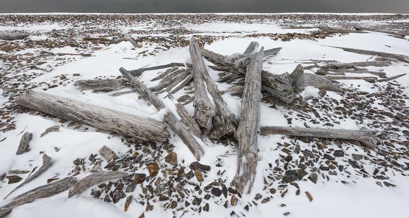 Driftwood, Svalbard