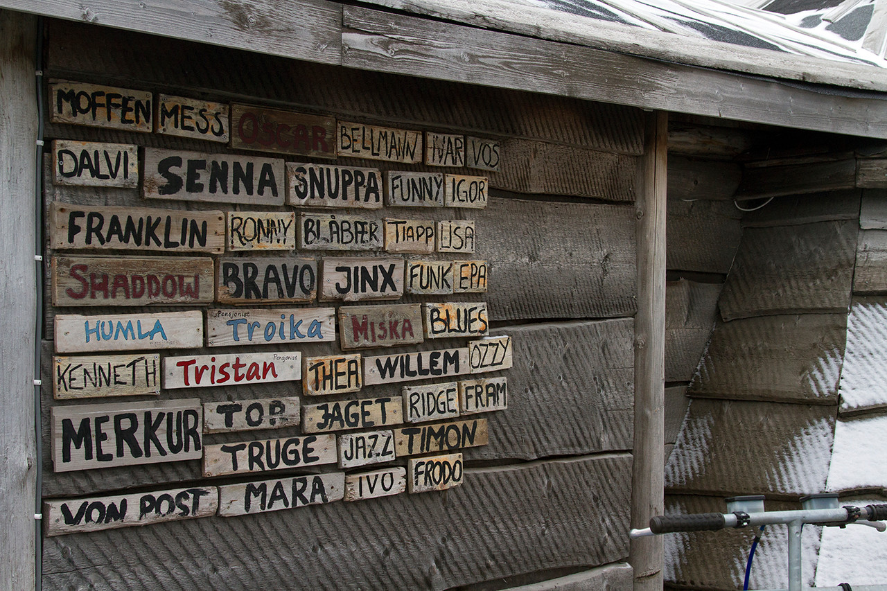 svalbard sledding dogs names on wooden wall
