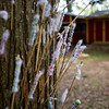 Blow darts left behind on Island Outpost are affixed to a tree following different troops' target competitions on the island in Lake Fausse Pointe State Park near Loreauville, LA, Thursday, July 3, 2014. <br /> <br /> Paul Kieu, The Advertiser