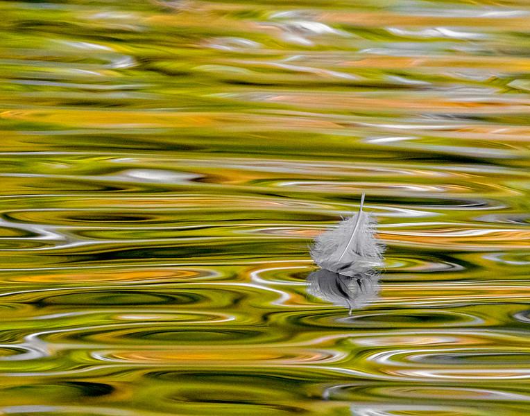 feather horiz 11x14.jpg