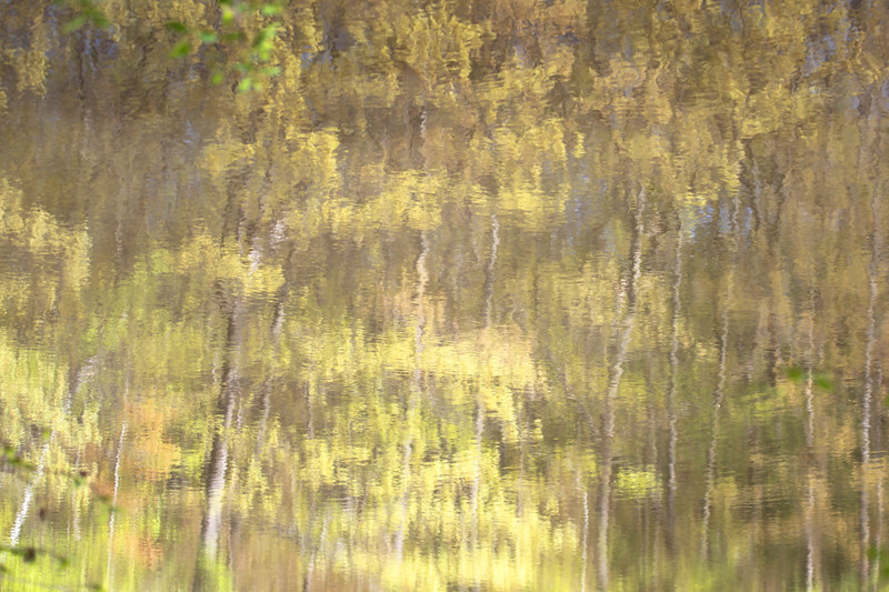 Reflections of trees in the lake water
