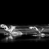 Swans Landing - 6