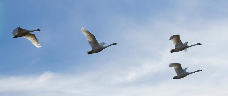 Wings Alight