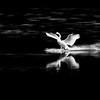 Swans Landing - 3