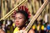 swaziland, lobamba, animals, mammals, humans, swazi culture, umhlanga, reed dance