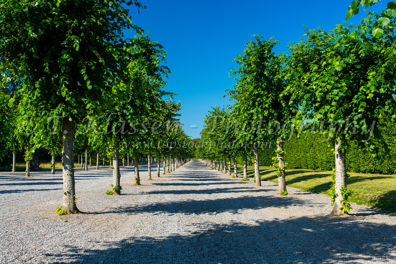Trees in the garden at Drottningholm Palace, near Stockholm, Sweden.