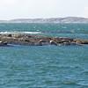 Seals resting here often.