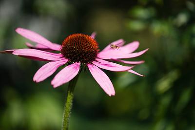 Flower - garden