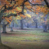 Fall in the Oak Pasture