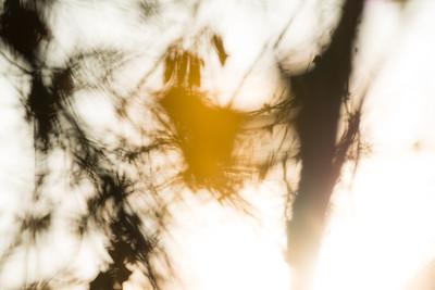 Falling leave