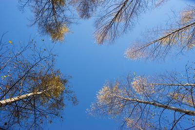 Sweden_autumn_life_MLangen_8731