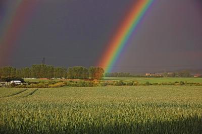 field-rainbow
