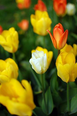 Flowers in Odenplan