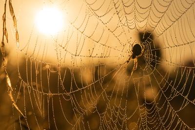 Spider web sunrise