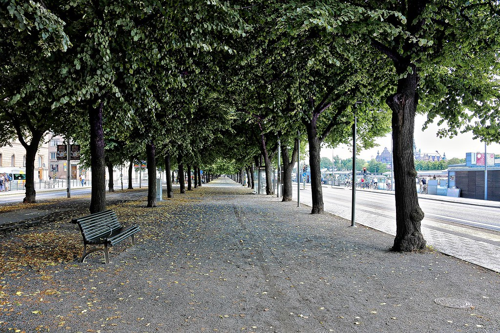 Stockholm - Boulevard of Trees