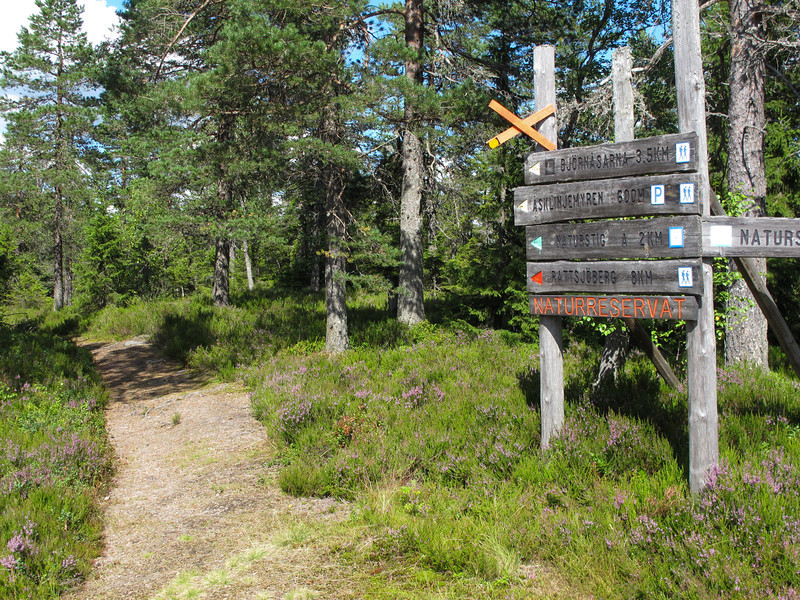 This hiking trail...on top of Hovfjället ski resort we had not tried earlier years.