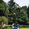 Midsummer 19980004