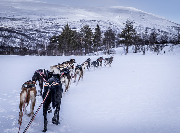 Nordic Transport! - Abisko, Sweden