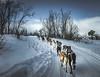 A snowy ride! - Abisko, Sweden