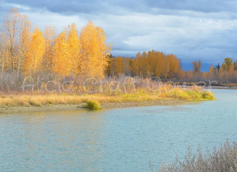 Flathead River in the Fall