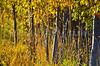 Fall Grasses