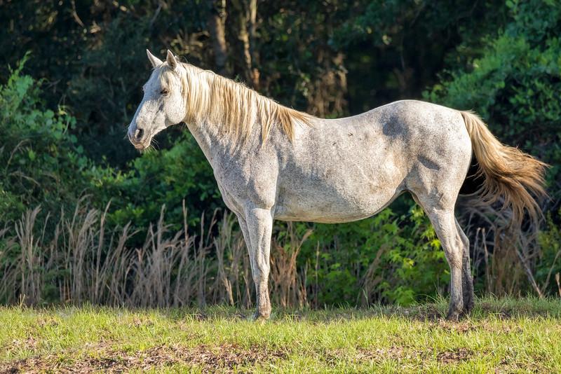 "Wild ""Spanish"" Horse"