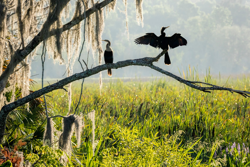 Sunrise at Sweetwater Wetlands Park, Gainesville, FL