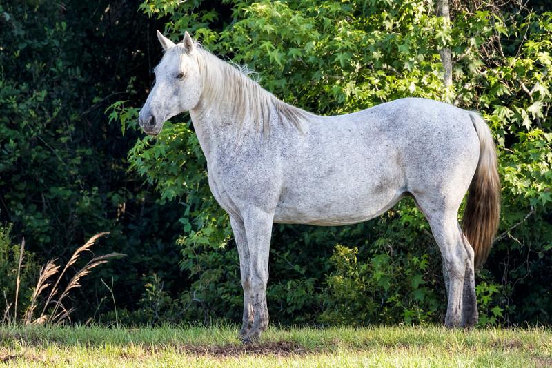 "Wild ""Spanish"" Horse 2"