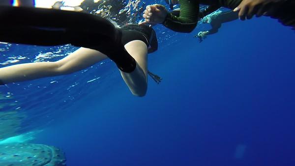Swim with Humpbacks in Tonga 2017