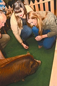 Danielle Reeves and Stephanie Powell get down with Maddie the pig at the Swine & Wine event held at the Elks Lodge on Saturday. (Jose Quezada - For the Times-Standard)