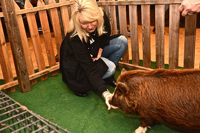 Cathy Mills, married to Eureka Police Chief Andy Mills, gets friendly with Maddie the pig by feeding the New Zealand pig some fresh carrots. (Jose Quezada — For the Times-Standard)