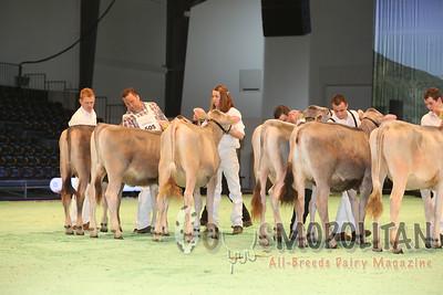 Swiss Expo Brown Swiss Hfrs 2015