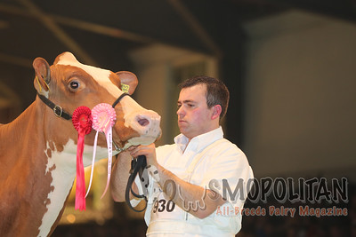 Swiss Expo Holstein Red Sr Cows 2015
