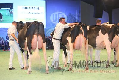 Swiss Expo Holstein SrCows15