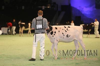 Swiss Expo Holstein Hfrs 2016
