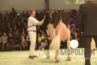 Swiss Expo Holstein Sr Cows16
