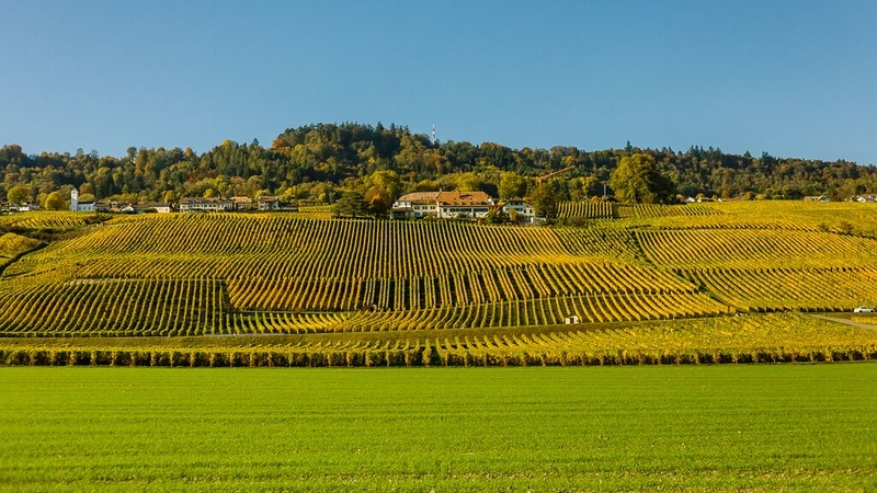 Some of the vineyards outside of Lausanne