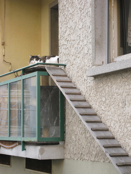 Neighbor chat