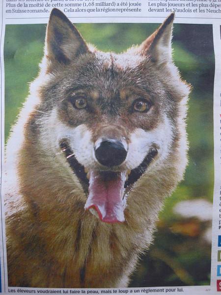 Le Loupe