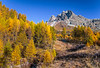Fall foliage color in the larch trees in the Engadin Valley, Graubuden, Switzerland, Europe.