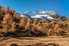 Fall foliage color in the mountains of the Poschiavo Valley near Cavaglia, Switzerland, Europe.