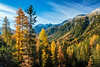 Fall foliage larch trees in the mountains near Resgia, Switzerland, Europe.