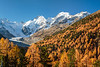 The snow capped Bernina peaks, Morteratsch Glacier and fall foliage color in the Bernina Valley, Switzerland, Europe.