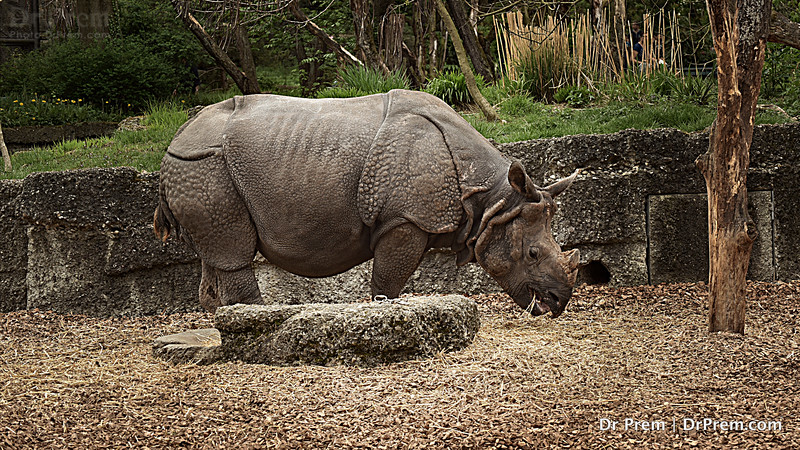 Looking At A Rhino Up Close